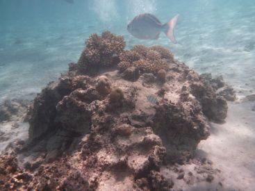 Mye fisk i lagunen