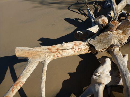 Driftwood på Rainbow beach