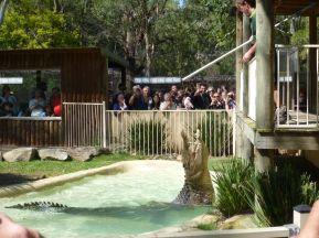 Saltvanns krokodille