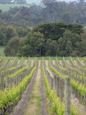 Vinmarker Yarra valley