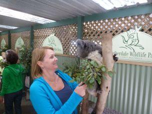 Koala i våken tilstand