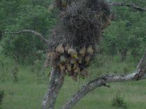 Fuglereir kollektiv